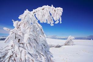 樹氷と鹿島槍ヶ岳など北アルプス遠望の写真素材 [FYI04301632]