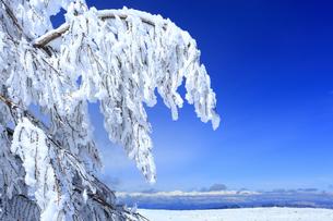 樹氷と白馬連峰など北アルプス遠望の写真素材 [FYI04301634]