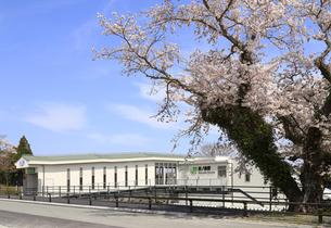 満開の桜と常磐線夜ノ森駅西口の写真素材 [FYI04301845]