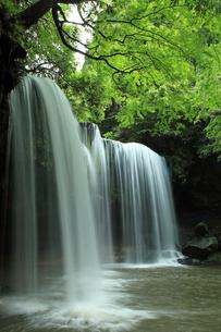 5月 新緑の鍋ヶ滝の写真素材 [FYI04301966]