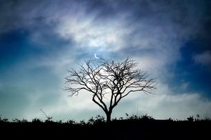夜の枯れ木の写真素材 [FYI04302234]