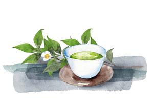 日本茶と茶の木水彩画のイラスト素材 [FYI04302266]
