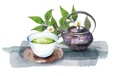 日本茶と茶の木のイラスト素材 [FYI04302267]