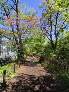 遊歩道 東京 玉川上水の写真素材 [FYI04302335]