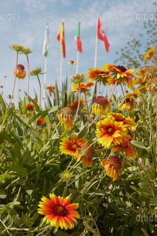 鮮やかな花と国旗と空 ウズベキスタンの写真素材 [FYI04302342]