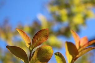 木の写真素材 [FYI04302361]