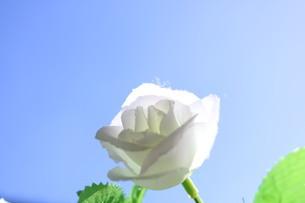 花の写真素材 [FYI04302365]