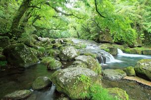 5月 新緑の菊池渓谷の写真素材 [FYI04302439]