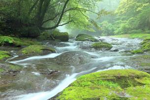 5月 新緑の菊池渓谷の写真素材 [FYI04302444]
