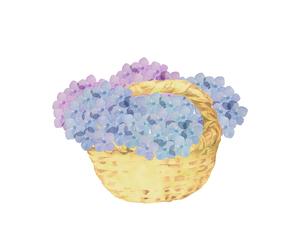 紫陽花の花かごのイラスト素材 [FYI04302446]