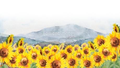 ひまわり風景画のイラスト素材 [FYI04302447]