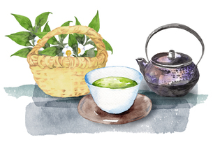 日本茶水彩画のイラスト素材 [FYI04302451]