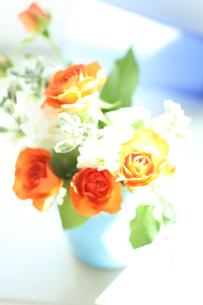 オレンジ色のバラ・白いストックと青い器で 背景(生花)の写真素材 [FYI04302516]