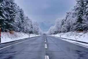 冬道の写真素材 [FYI04302548]