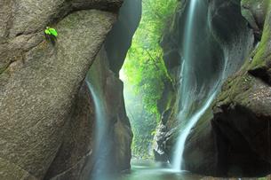 5月 新緑の由布川峡谷の写真素材 [FYI04302572]