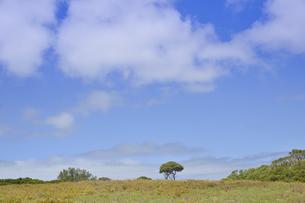オーストラリア・西オーストラりア州のフリーマントルから沖合約18kmのインド洋に浮かぶ小島ロットネスト島の木々と空と雲のある光景の写真素材 [FYI04302708]