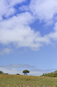 オーストラリア・西オーストラりア州のフリーマントルから沖合約18kmのインド洋に浮かぶ小島ロットネスト島の木々と空と雲のある光景の写真素材 [FYI04302709]