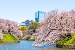 千鳥ヶ淵の満開の桜の写真素材 [FYI04302721]