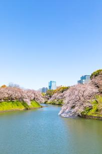 千鳥ヶ淵の満開の桜の写真素材 [FYI04302730]