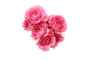 薔薇の花束 の写真素材 [FYI04302746]