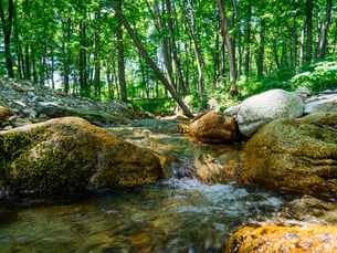 森と小川の写真素材 [FYI04302753]