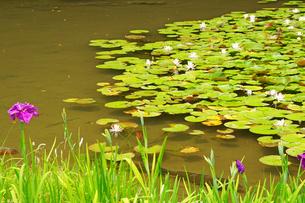睡蓮の池の写真素材 [FYI04302908]