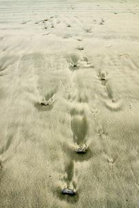 波当津海岸の写真素材 [FYI04303386]