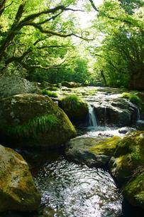 新緑の菊池渓谷の写真素材 [FYI04303423]