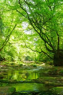 新緑の菊池渓谷の写真素材 [FYI04303425]