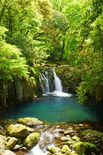 新緑の菊池渓谷の写真素材 [FYI04303426]