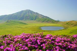 ミヤマキリシマと草千里の写真素材 [FYI04303447]