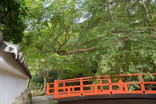 秘境の地京都「紅葉狩り」の写真素材 [FYI04303494]
