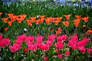 花畑の写真素材 [FYI04303513]