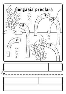 ニシキアナゴ ぬりえ 応募用紙のイラスト素材 [FYI04303706]