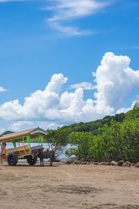 西表島の水牛車の写真素材 [FYI04303762]