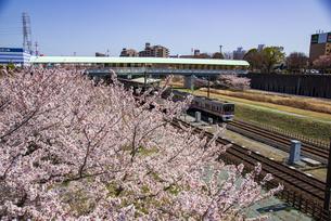 満開の桜と北総鉄道線白井駅と上りの列車の写真素材 [FYI04303967]