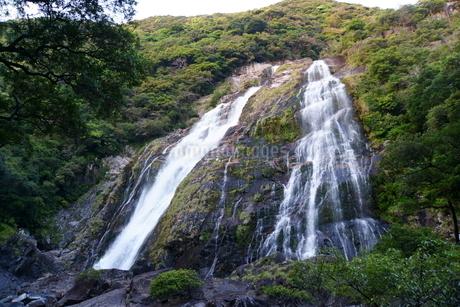 屋久島 大川の滝の写真素材 [FYI04303971]