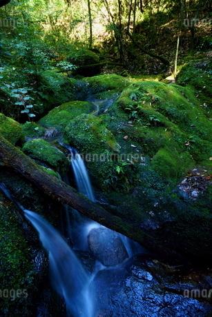 屋久島 白谷雲水狭 苔むす森 渓流の写真素材 [FYI04303976]