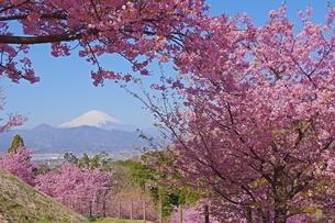 桜と富士山の写真素材 [FYI04303983]