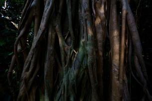 屋久島 神秘の森の写真素材 [FYI04303987]