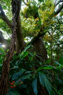 屋久島 神秘の森の写真素材 [FYI04303988]