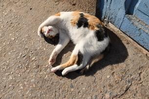 中東の町で昼寝する野良猫の写真素材 [FYI04303990]