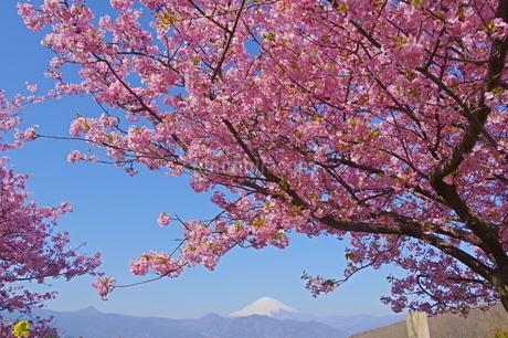 桜の向こうの富士の写真素材 [FYI04303994]