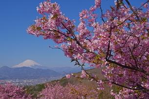 富士山と桜の写真素材 [FYI04304004]