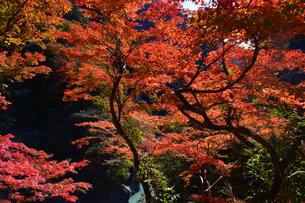 大血川渓谷の紅葉  金蔵落しの渓流の写真素材 [FYI04304259]