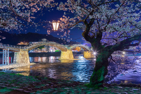 錦帯橋の夜桜Iの写真素材 [FYI04304391]