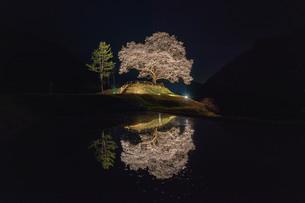 樹齢200年の桜の写真素材 [FYI04304403]