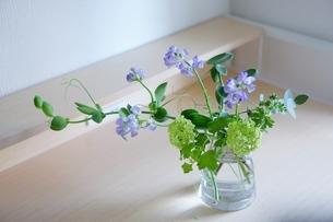 花の写真素材 [FYI04304405]