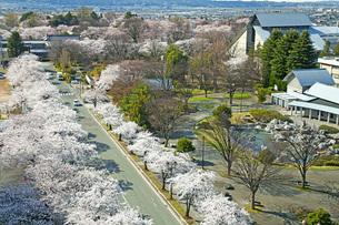 春の景の写真素材 [FYI04304445]