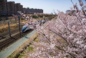 満開の桜並木と成田空港線スカイライナーの写真素材 [FYI04304697]